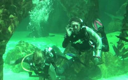 Juan Luis buceando entre tiburones